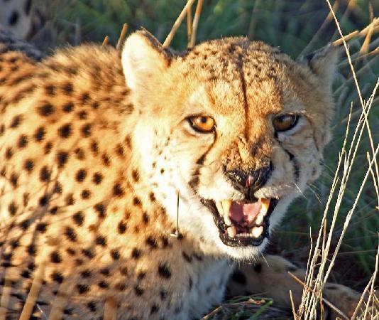 Bagatelle Kalahari Game Ranch: Nur keine Angst, Respekt reicht