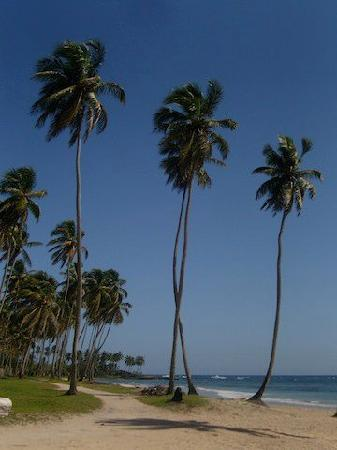 The Palace at Playa Grande: The end of our horse back ride - near Cabrera, DR
