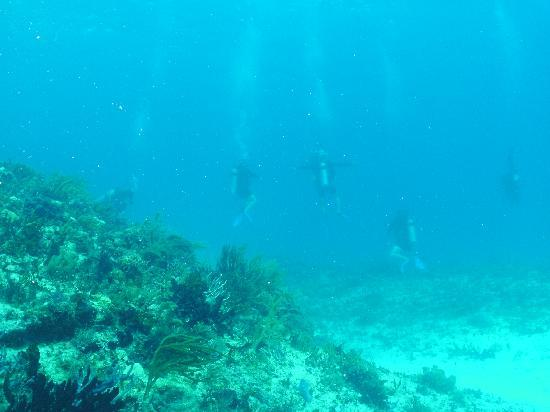 Scuba S.cool Diving Center: Very Clear water, divers in the background
