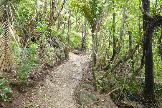 Bream Head Coast Walks: Start of Mt Manaia Track