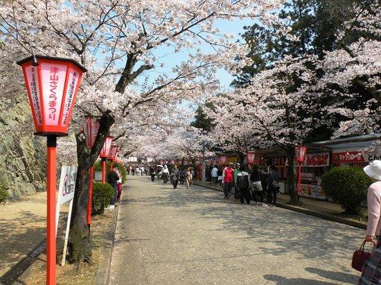 Tsuyama, Japan: 桜の時期は屋台が並んでます。