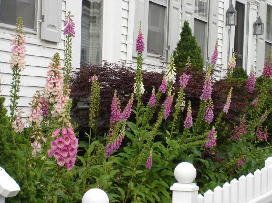 Ampersand Guesthouse: flowers outside the front