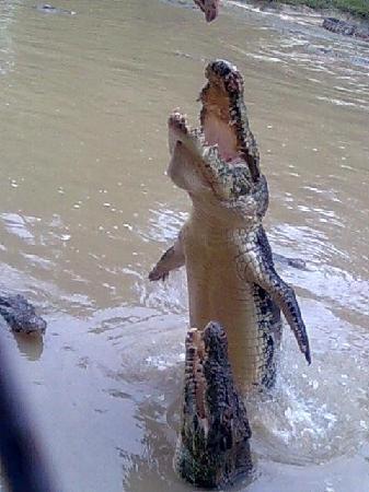 Jong's Crocodile Farm & Zoo : Feeding time!