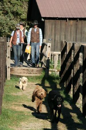 Red Horse Mountain Ranch: Good Morning--Wranglers and ranch dogs