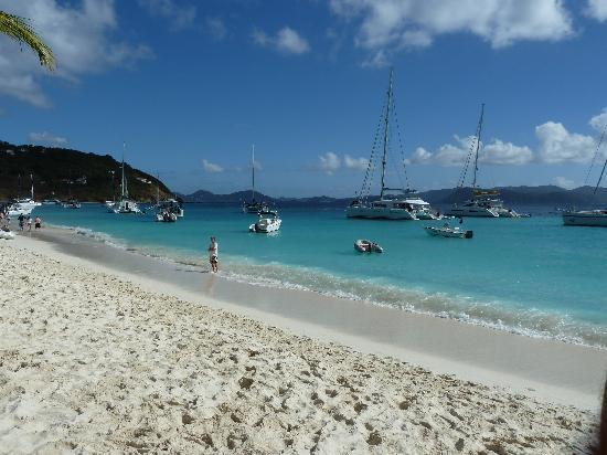 Good Day Charters: sorry dollar in white bay