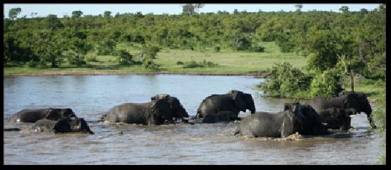 Manyeleti Game Reserve, Νότια Αφρική: In the drink!