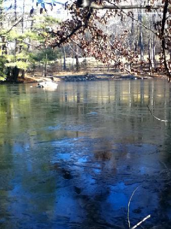 Creekwood Village Resort: Pond behind cabin