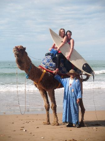 Surf Berbere Surf Camp Taghazout: riding a camel with my board
