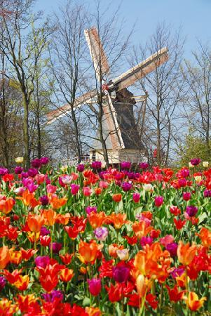 Lisse, The Netherlands: Keukenhof Gardens