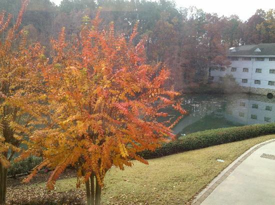 Peachtree City, GA: Property view from the restaurant