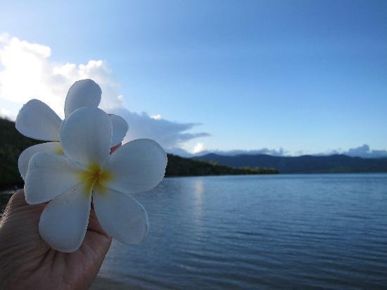 Safari Island Lodge : flowers