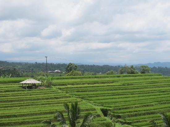 Jatiluwih Green Land: Vie of the Jatiluwih rice field