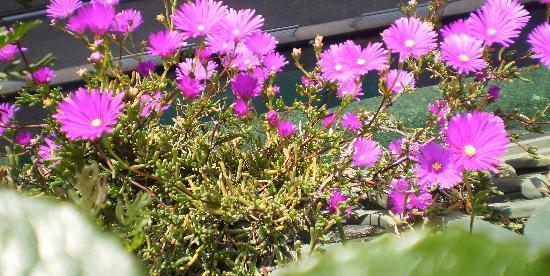 Byzance cote Balcon : Les fleurs du balcon