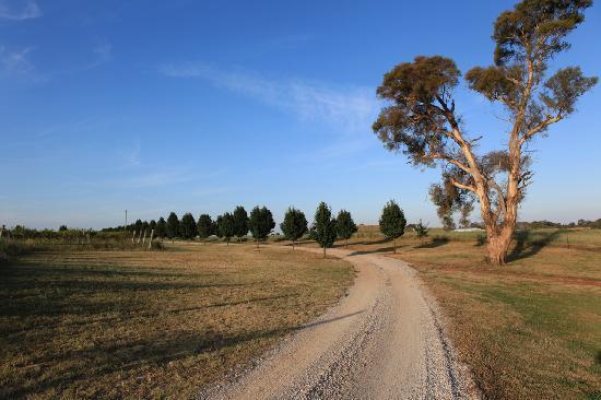 Owl Head Lodge: driveway