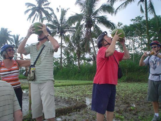 Bali Breeze Tours: tourists who are drinking young coconut in the rice fields