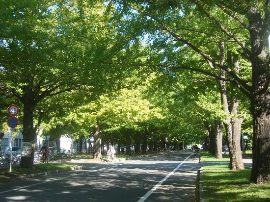 Sapporo, Jepang: 北大並木♥