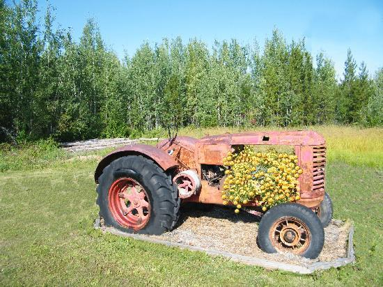 Buckhorn Bed and Breakfast: Antique Tractor