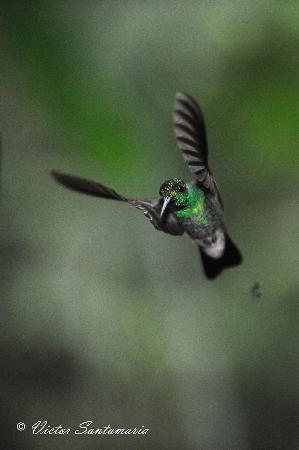 Panama Rainforest Discovery Center: Hummingbirds are common visitors to the PRDC