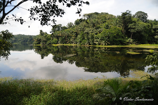 Gamboa, Panama: Calamito Lake offer great views