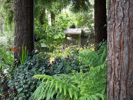 Cambria Pines Lodge: Redwood Walk
