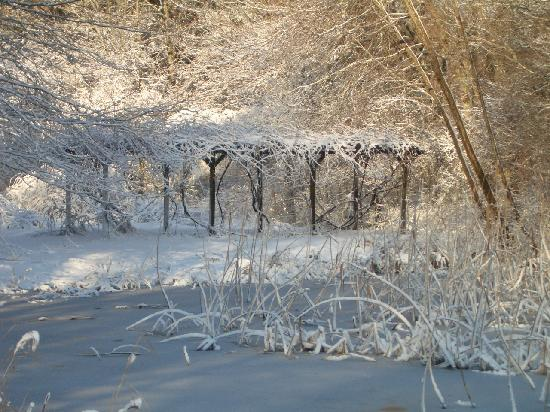 Rock Village Bed and Breakfast: winter grape arbor