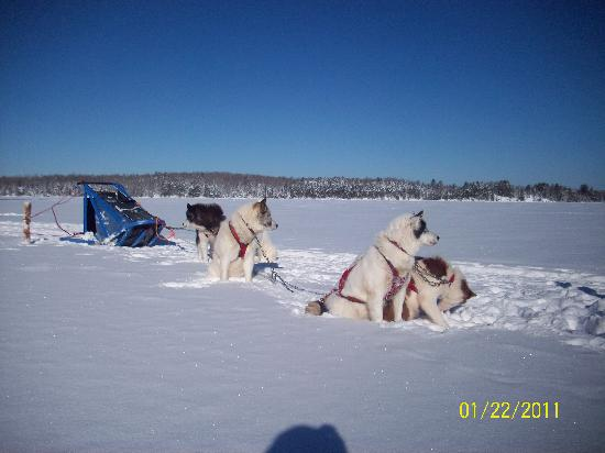 Wintergreen Dogsled Lodge: Dogs on White Iron Lake