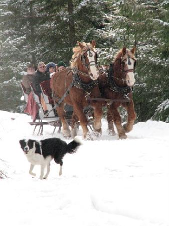 Western Pleasure Guest Ranch: Winter sleigh riding fun!