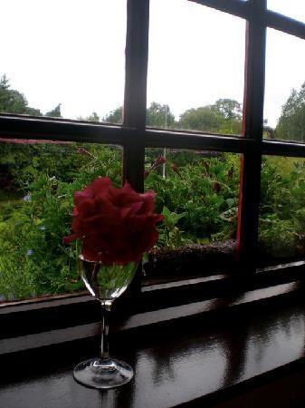 Woodside Lodge: Window to my Westport world