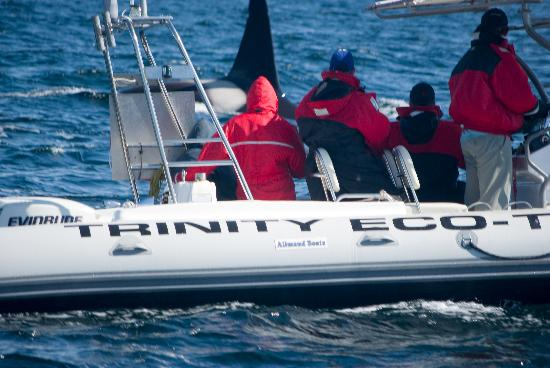 Trinity Eco-Tours: Shot on the boat