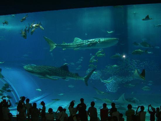 Motobu-cho, Japan: Churaumi Aquarium