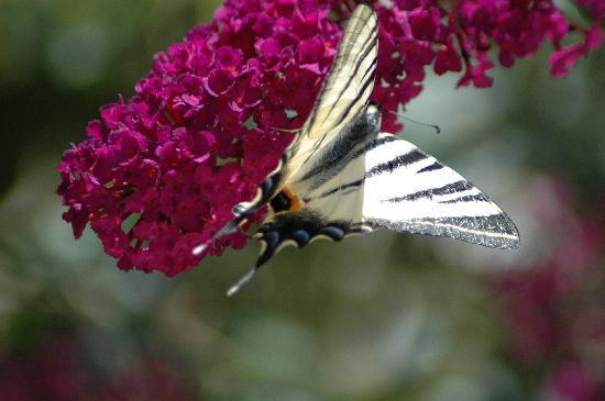 Villa Kredo: butterfly