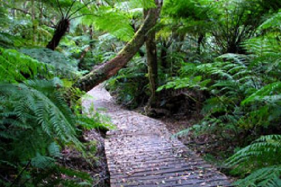 Forest Edge Nature-lovers' Retreat : Stunning Forest Walks, biking trails