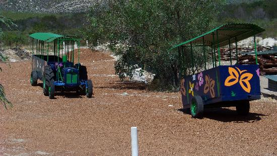 Montagu Guano Cave Resort : Tractor