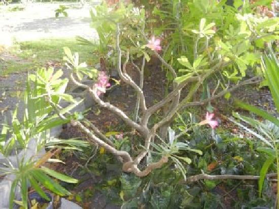 Philsha's Guest House: Stunning gardens