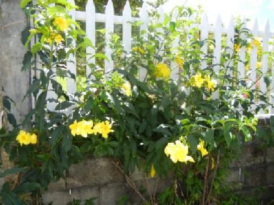 Philsha's Guest House: Gardens