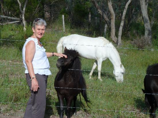 Diamondvale B&B Cottages: Lorraine and the friendly ponies