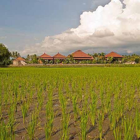 Mumbul Guesthouse: View from the ricefields
