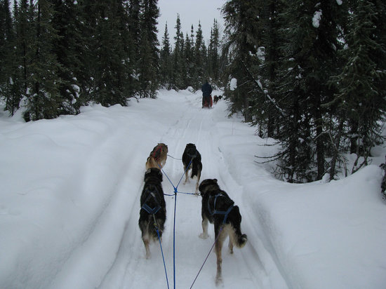 Paws for Adventure: Looking down the trail