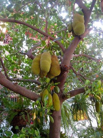 Tours du Jour Mexico: The Jack fruit
