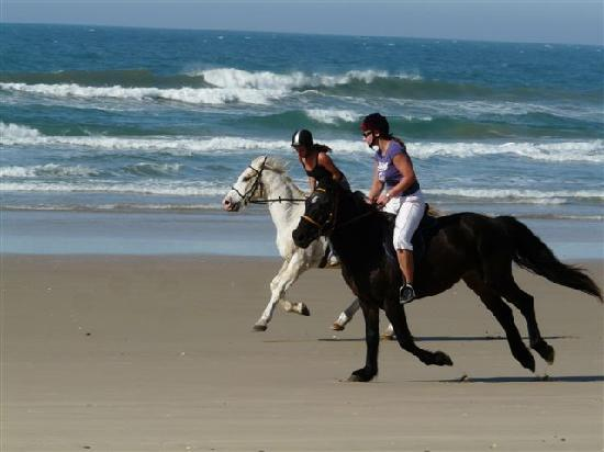 Crawford's Beach Lodge : Horse Riding on the Beach