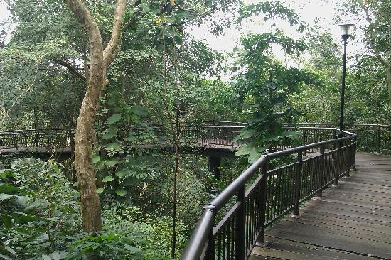 The Southern Ridges Canopy Walk : canopy walks - memphite.com