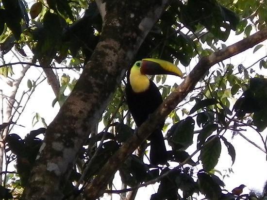 Las Islas Lodge: Beaucoup d'oiseaux