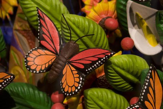 Discover Mexico Cozumel Park: butterfly