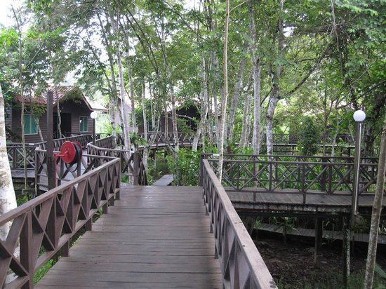 Kinabatangan Riverside Lodge: Raised walkway to the rooms.