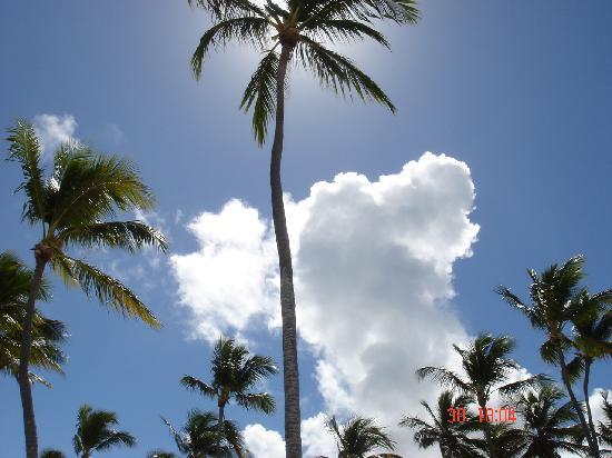 SprinClub Palm Beach: le palme