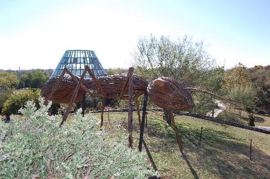 San Antonio Botanical Garden: Ant on a hilltop