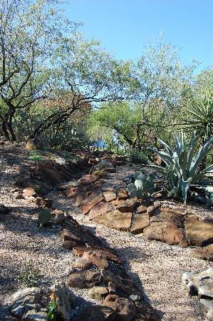 San Antonio Botanical Garden: Cactus terrain
