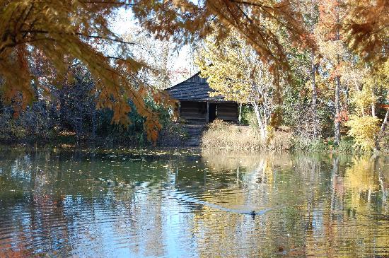 Japanese Garden Picture Of San Antonio Botanical Garden San Antonio Tripadvisor