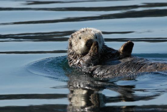 True North Kayak Adventures: Otter