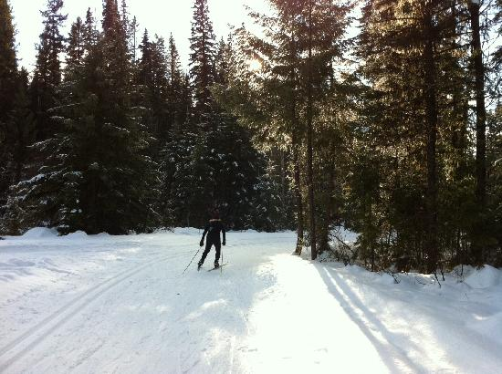 Caledonia Nordic Ski Club: Rounding the corner before the biathlon range